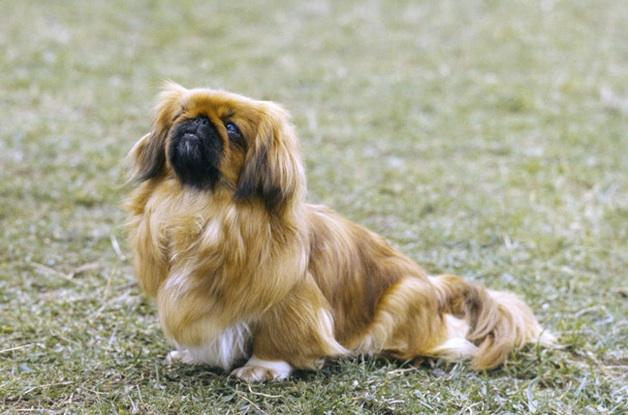 kanapé angolul ~ kanapé kutyák  citydogs